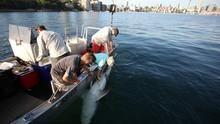 L'armée des requins Voir la fiche programme