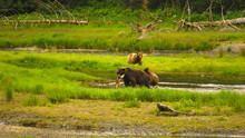 Les ours de l'île de la peur Voir la fiche programme