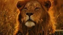 Varázslatos Serengeti film