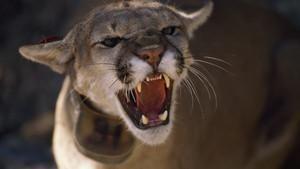کشنده ترین حیوانات جهان برنامه
