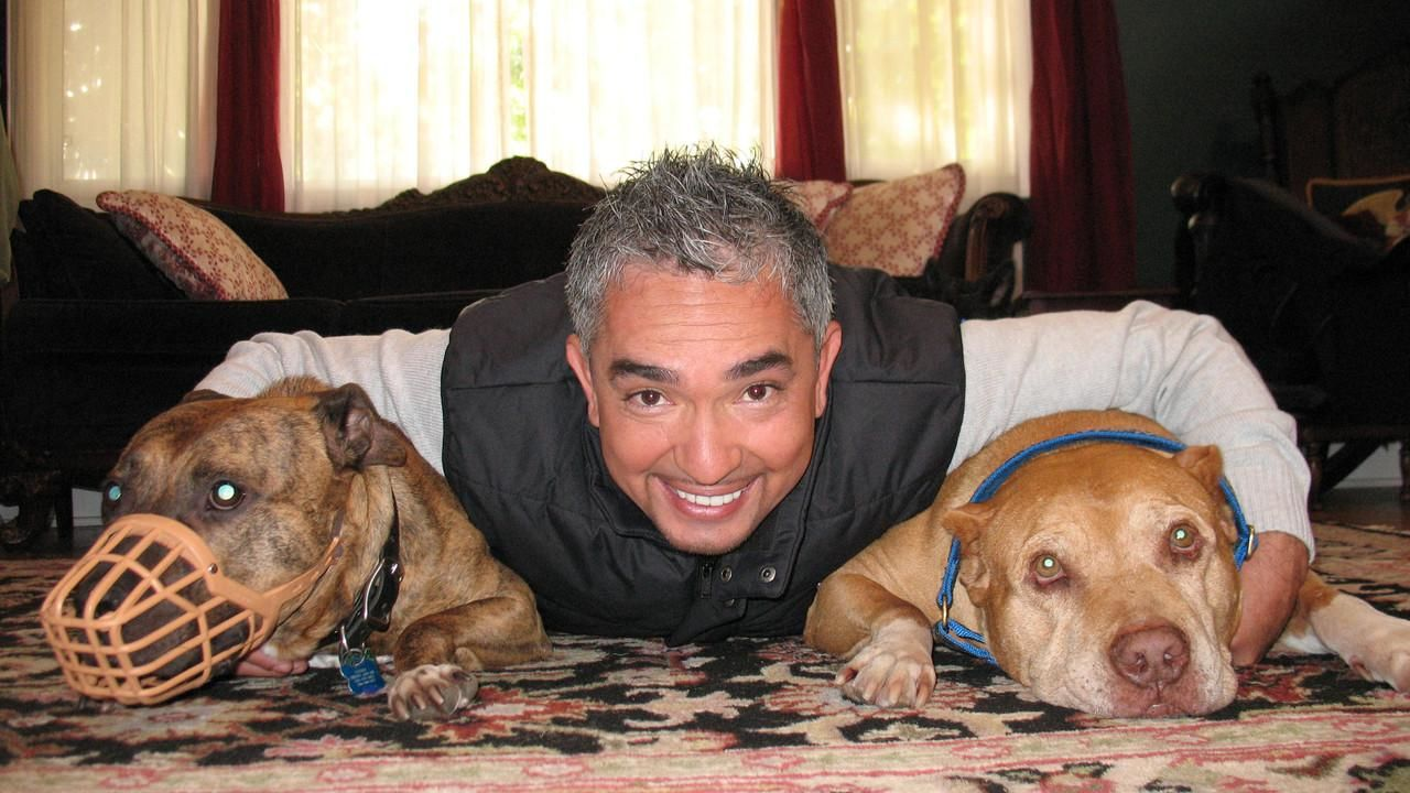 about the dog whisperer 4 show national geographic channel asia. Black Bedroom Furniture Sets. Home Design Ideas