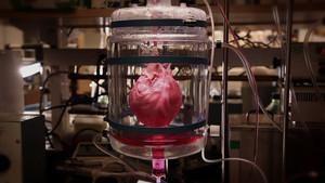 Bir Kalp Yaratmak SAYFAYA GİT