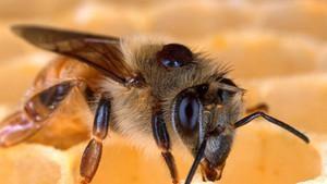 Das Schweigen der Bienen