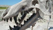 Prehistoric Park show