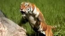 Maneater Manhunt: Tiger at Large show