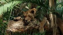 Mocsári oroszlánok film