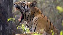 Tajemství indické divočiny pořad