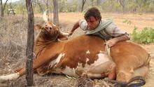 Outback Wrangler show