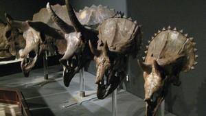 دایناسورهای عجیب برنامه