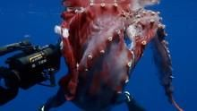 Hunt For The Giant Squid show