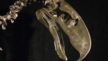 Prehistoric Predators: Terror Raptor show