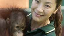 Unter Affen Programm