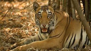 L'Inde à l'état sauvage
