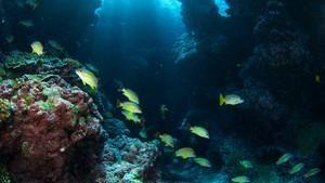 Raj za morske pse
