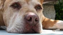 Dog Whisperer 5 show