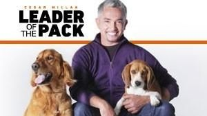Cesar Millan, a falkavezr