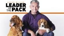 Cesar Millan's Leader Of The Pack show