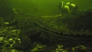 Mother Croc show
