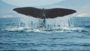 Die geheime Welt der Ozeane