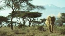 Vahşi Filler SAYFAYA GİT