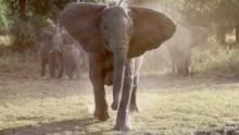 Elephant Wars show