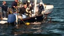 Labor a vadonban: Cápaszemmel film