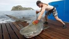 Shark Men 3 show