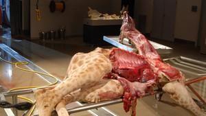 Die Autopsie Von Jane Doe Deutsch