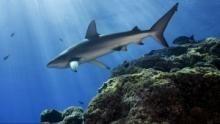 Die letzten Haie der Osterinsel Programm
