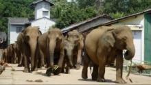 Elephant Gone Wild show