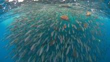 Ostrov žraloků pořad