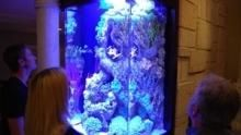 Fish Tank Kings show