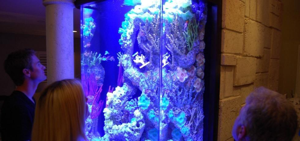 Fish Tank Kings – Gigantische Wasserwelten