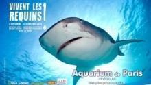 Vivent les requins ! Voir la fiche programme