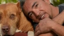 Der Hundeflüsterer Programm