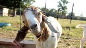 動物有心人Animal Intervention
