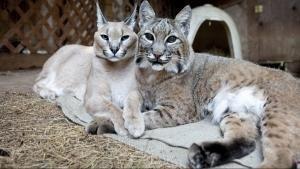 Niezwykli przyjaciele ze świata zwierząt
