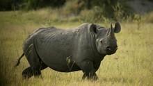 Forgotten Rhino show