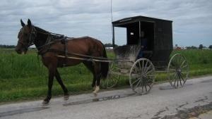 遠離艾米許家園Inside Amish Out of Order