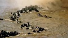 Büyük Serengeti SAYFAYA GİT