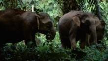 Top 10 – az állatvilág legjei film