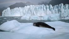 Leopard Seal - Lords of the Ice show