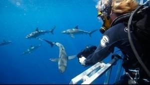 Shark Men - Die Haiforscher
