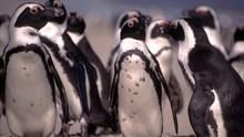 Penguin Death Zone show