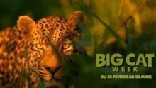 Big Cat Week Voir la fiche programme