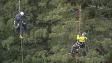 Redwoods - Anatomy Of A Giant show