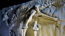 Dino Death Trap Programma