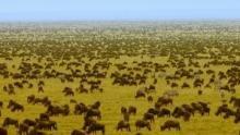 L'impitoyable Serengeti Voir la fiche programme