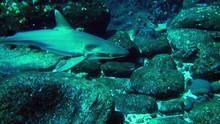 Secret Shark Pits show