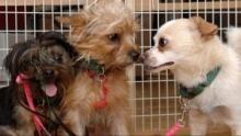 Dogtown - Das Hundeasyl Programm